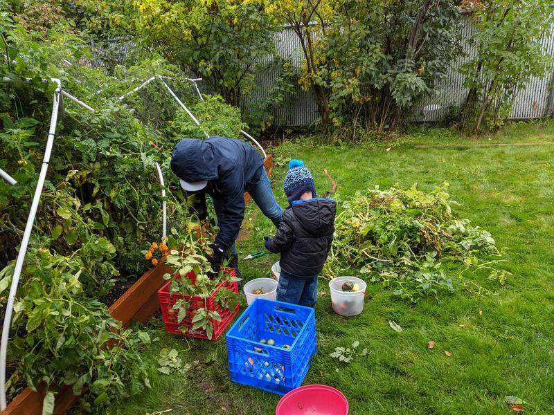 Jacqueline and her son stripping tomatoes from the garden in the rain