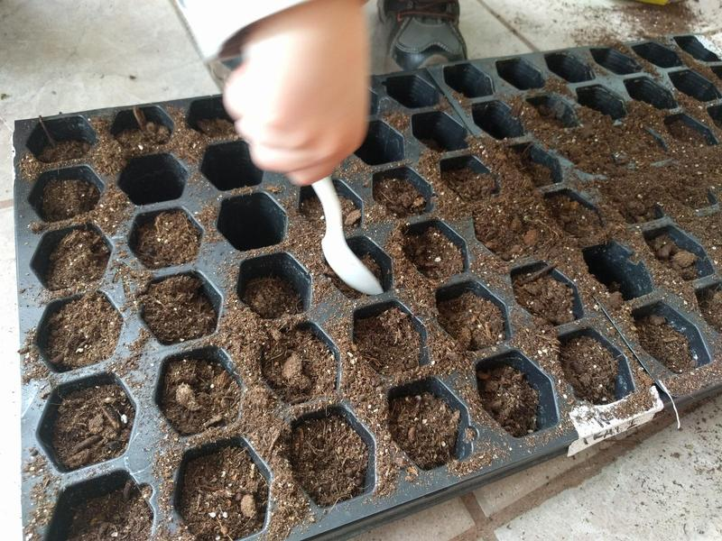 seed starting tray being filled with dirt by a child's hand holding a plastic spoon