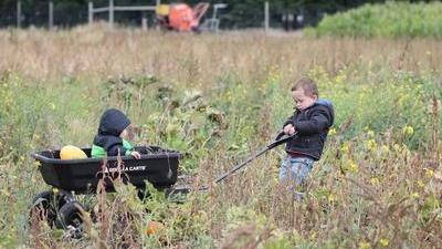 boy pulls a big black wagon of squash and his little sister through a weedy field