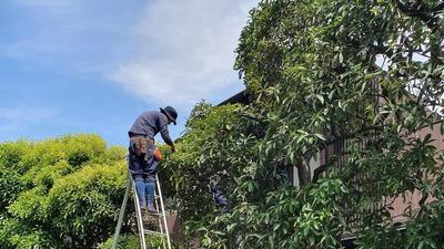 man standing at the top of a ladder pruning a tree