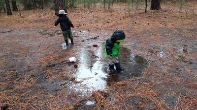 two kids stomping in a big muddy puddle filled with pine needles in a pine forest