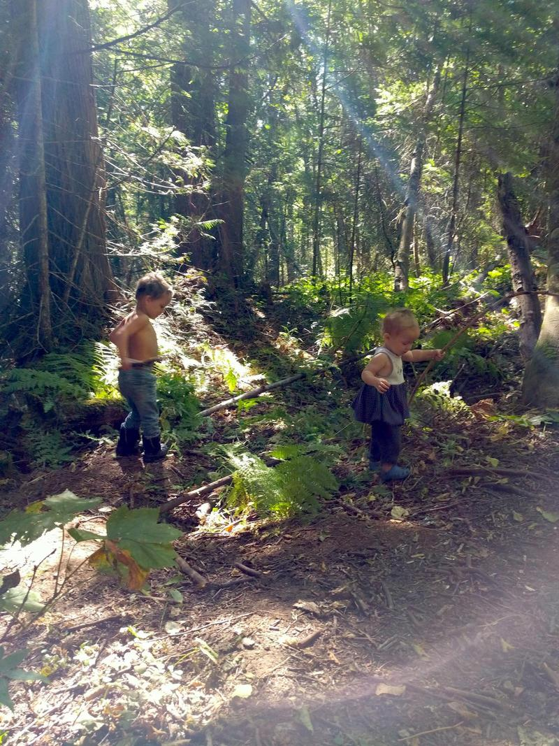 two kids carrying sticks and exploring a pine forest with ferns